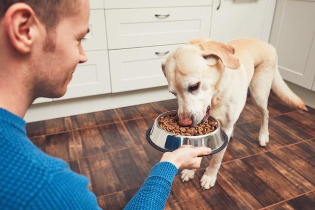 L'importance de la nourriture sur nos animaux de compagnie