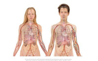 Hepaphenol: un nouveau traitement pour prendre soin de votre foie